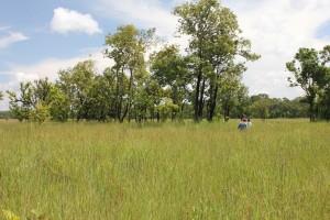 Surveying wetlands in Cambodia