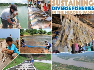 AFS Mekong collage