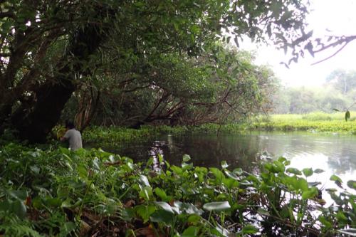 Sampling a wetland in Cambodia