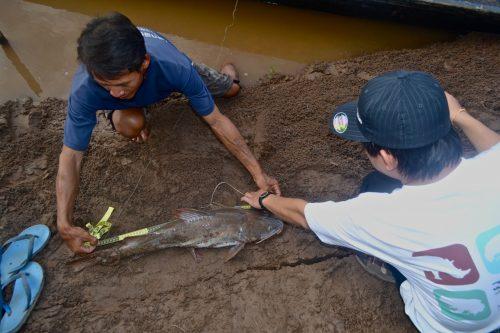 Measuring Fish Length